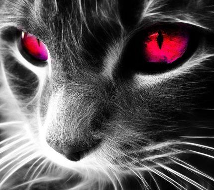 Красные глаза кошки скачать картинку бесплатно на смартфон.