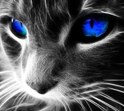 Скачать картинки и фото кошек и собак.