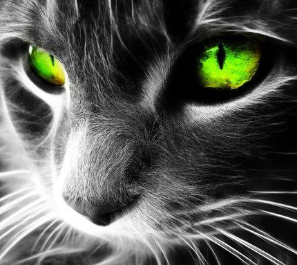 Кот монстр скачать бесплатно аватар, ужасная картинка с котом.