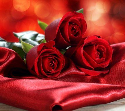 роза картинка скачать