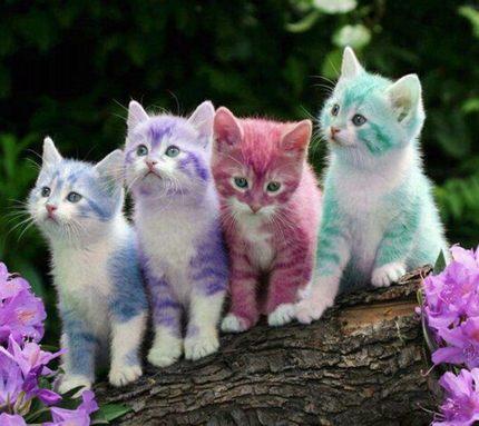 скачать картинки с котятами.