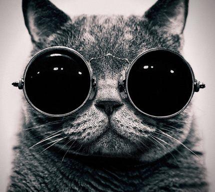 Картинка с котом в одежде с капюшоном. Скачать прикольный аватар.