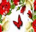 Розы С Бабочкой