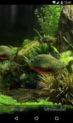 Андроид рыбками живые аквариум с на обои